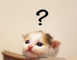 知りたがり猫